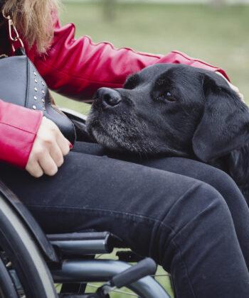 Mozgássérült-segítő kutyák